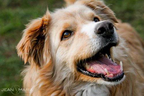 Jasper is an adoptable Retriever mix in Moscow, Idaho. This is not any dog mentioned in this story.