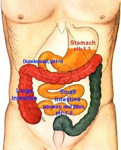 Our stomach