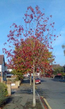 Haikus Autumn  (Traditional 5-7-5)