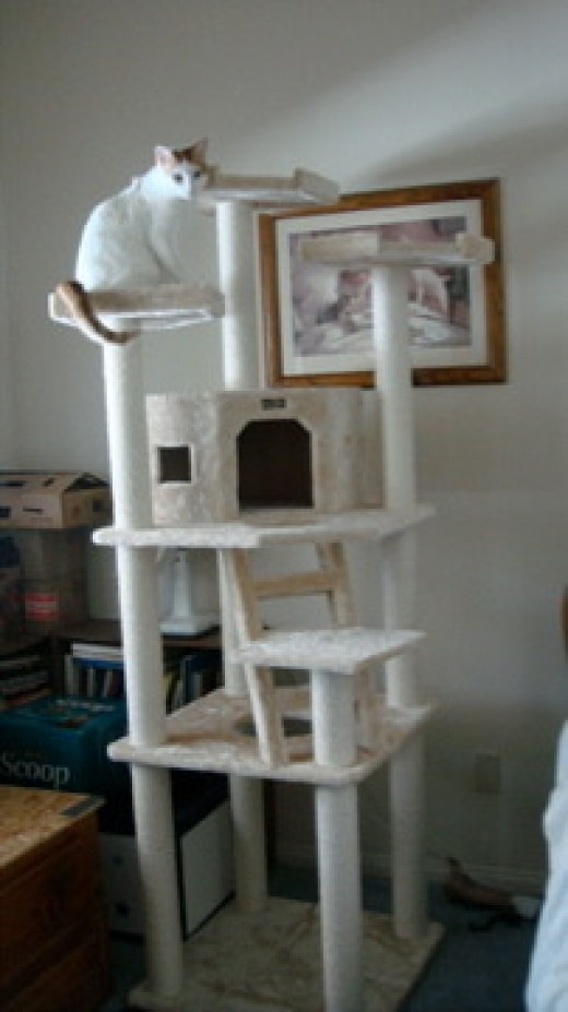 Armarkat Cat Tree Model A8001, Beige