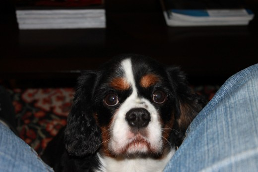 My Dog Winry