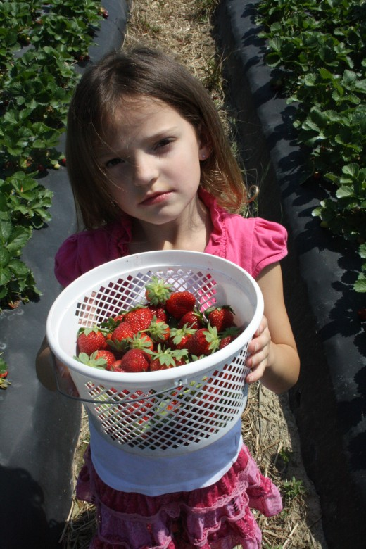 Trinity with her bucket of strawberries