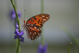 Is a butterfly good or beautiful?