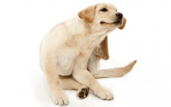 How to Get rid of dog Dandruff Naturally