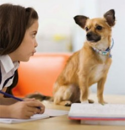 How to Stop Dog Aggression towards Children