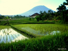 The majestic Mount Agung, with a classic Bali rice field in the foreground.