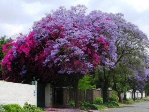 Jack Holloway at: http://sequoiagardens.wordpress.com