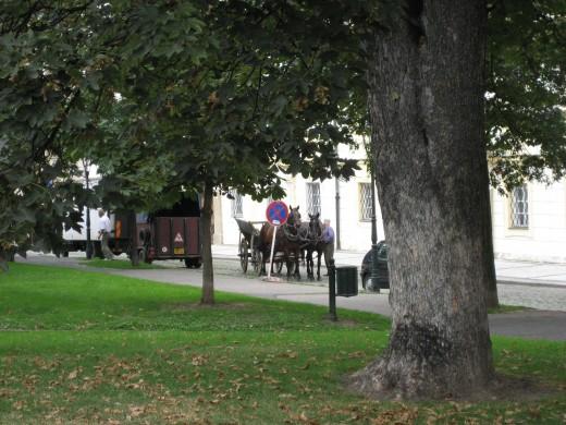 Carriage horses in Prague, Czech Republic
