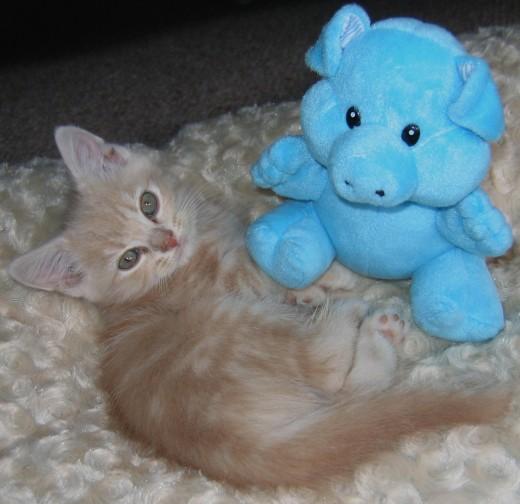 Our Kitten Leo