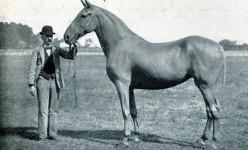 Unusual Horses