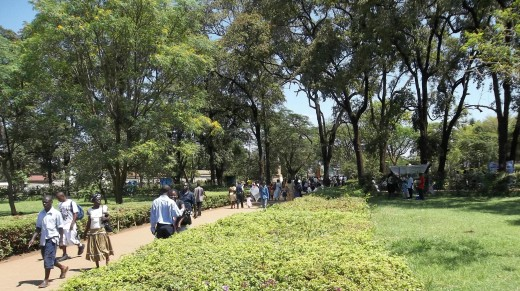 Jomo Kenyatta Grounds, Kisumu. You can form a group to add more trees to public parks with authority from the City Council