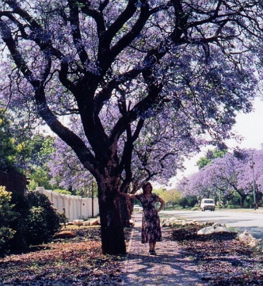 Me standing under the blooming Jacarandas before I left Johannesburg, South Africa