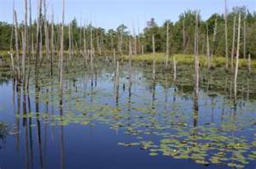 Typical wetland