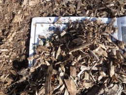 Place 3-5 newspaper sheets overlapping then top with 2-3 inches of wood chips, pine bark or, pine straw.