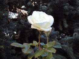 Fingerprints, snowflakes, DNA, you and me, even every rose, these are expressions of uniqueness.