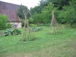 Here is how you want your teepee frames to look to grow your pole beans on.