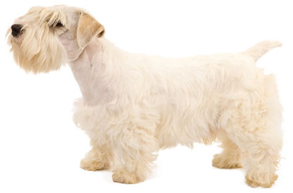 Low Shedding Dogs