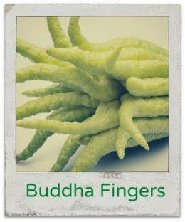 Buddha Fingers