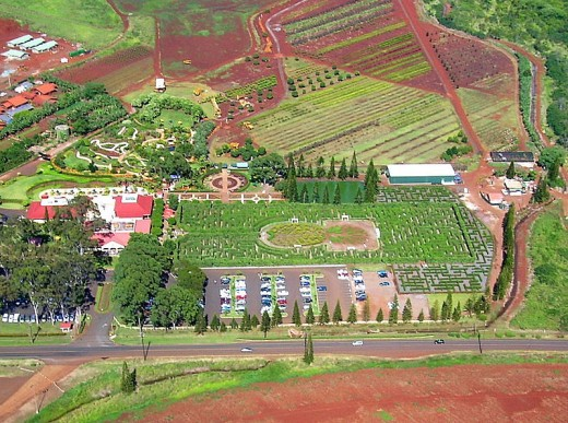 The Pineapple Maze, the world's largest maze.