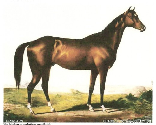 Lexington sired the first Kentucky Derby winner, Aristides.