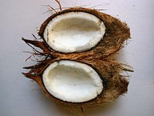 The coconut fruit
