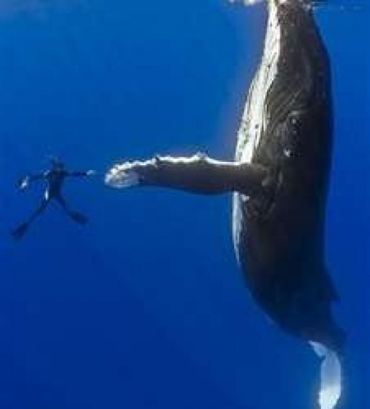 Nice to meet you, Mr. Whale.