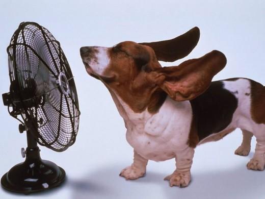 It's sooo hot!