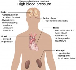 Diagram of the heart and its relation to the brain and blood pressure.