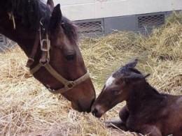 Foal just born.