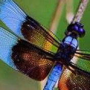 DragonflyTreasure profile image