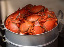 Cooked Blue Crabs turn bright orange when cooked and they are delicious.