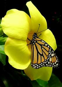 Poetry is the butterfly wanting to be held