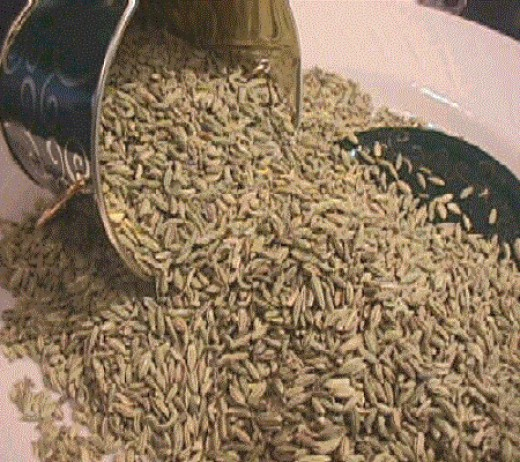 A bucket of harvested fennel seeds