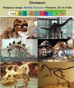 Human beings will become extinct like the Dinosaurs