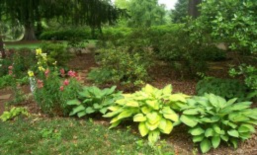 Combined Hostas are such a long lasting beauty for the garden in summer.