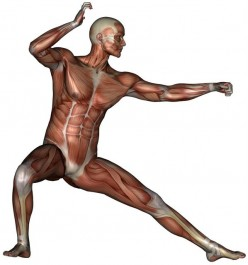 Understanding The Nature of Muscles‏