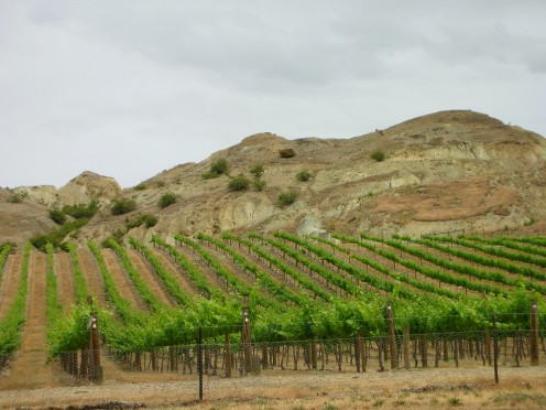 Central Otago Vineyard