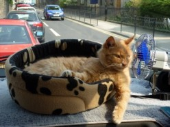 Travelling with a cat in a motorhome - one couple's adventure.