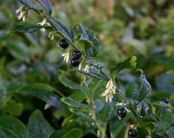 Best plants for winter gardening