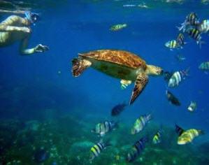 Amazing sea life opera!