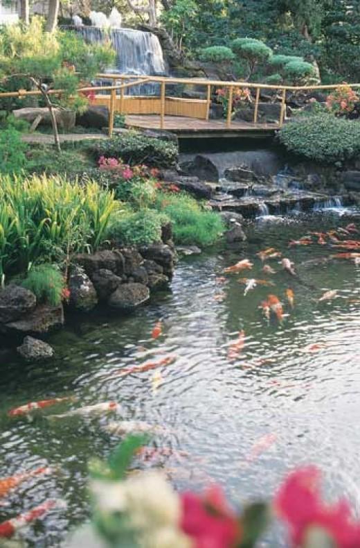 Pagoda Hotel Garden and Koi Pond