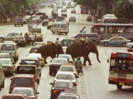 Elephants making there way through Bankok traffic