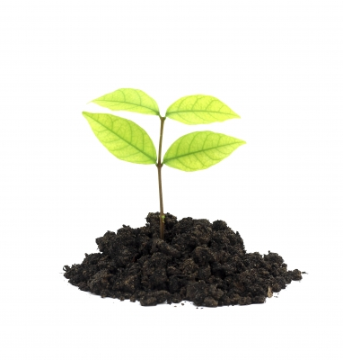 All that life needs in order to grow.is encouragement.