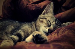 """Were did the saying """"good night"""" or """"sweet dreams"""" come from?"""