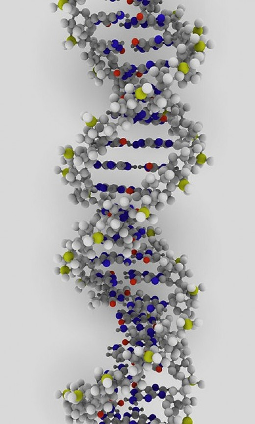 Rendering of DNA