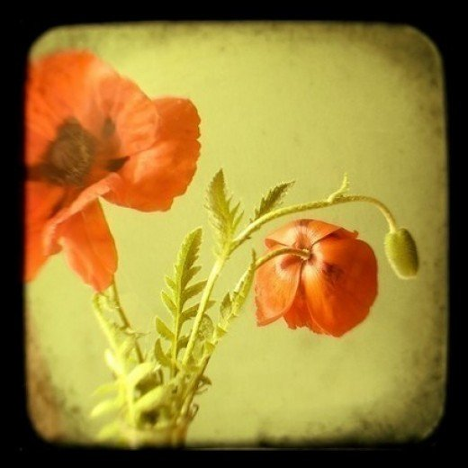 Tall Poppy Syndrome - Don't allow others to steal your Dream!