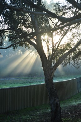 A place of soft days, where the morning quietly clear its throat with the whipbird's duet and kookaborra's glee...