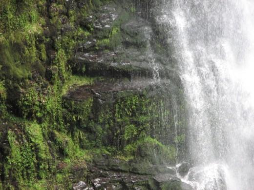 Mossy rocks and a waterfall, Otways, Australia.