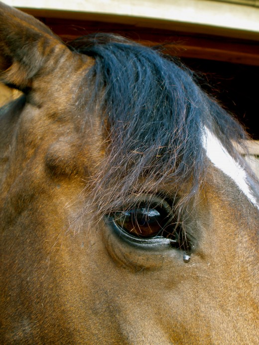 Equine awareness shows in their eyes.