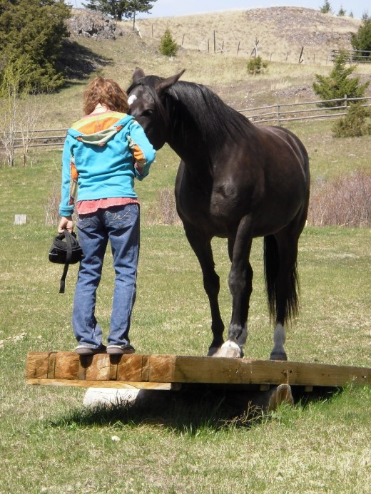 With consistent communication and high-value rewards, Liz Mitten Ryan uses natural horsemanship techniques to habituate the horse to the unstable teeter-totter.